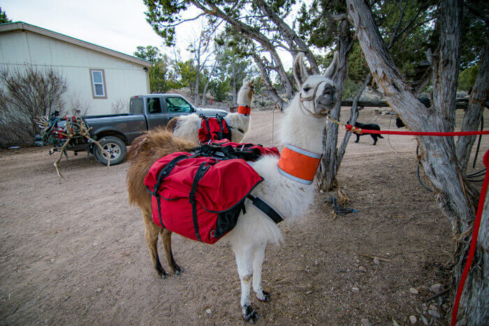 This is what your should expect your llama pack setup to look like