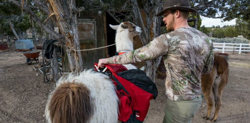 How To Saddle A Pack Llama