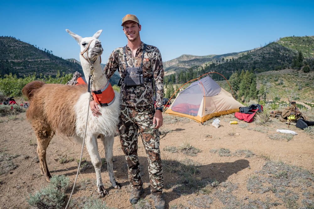 pack llama utah backcountry elk hunting