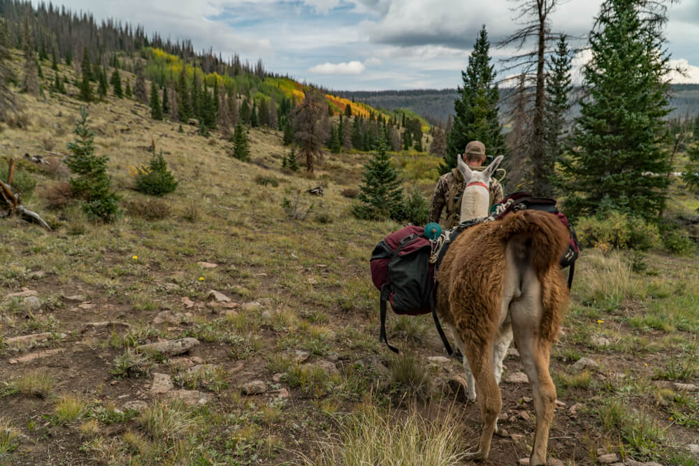 pricing for pack llama rentals in utah nevada arizona